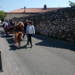 Kočija s konjima iz Vodičajne