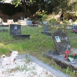 Zakon zabranio ukope kućnih ljubimaca na groblju