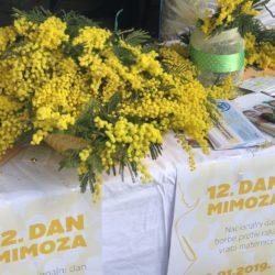 Obilježavanje Dana mimoza u Rijeci