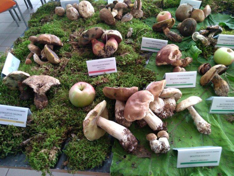 Jesenska radionica i izložba gljiva