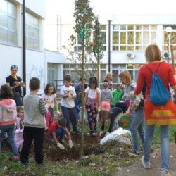 Sadnja stabala u okolišu OŠ Vladimir Gortan