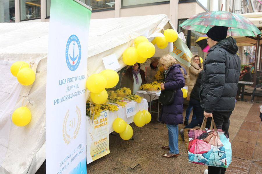 Obilježen Dan mimoza - Nacionalni dan prevencije raka vrata maternice i ginekoloških tumora