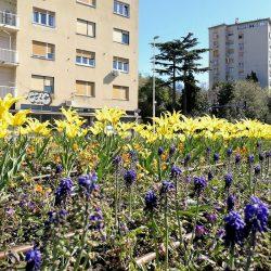 Gradske gredice i parkovi uljepšani cvijećem