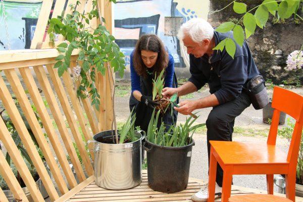 Djelatnici Čistoće danas zasadili biljkeDjelatnici Čistoće danas zasadili biljke