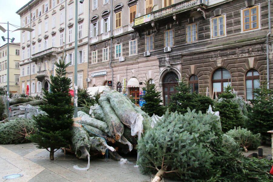 Prodaja božićnih jelki