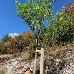 Sadnja stabala na cesti prema Viškovu - Europski tjedan mobilnosti
